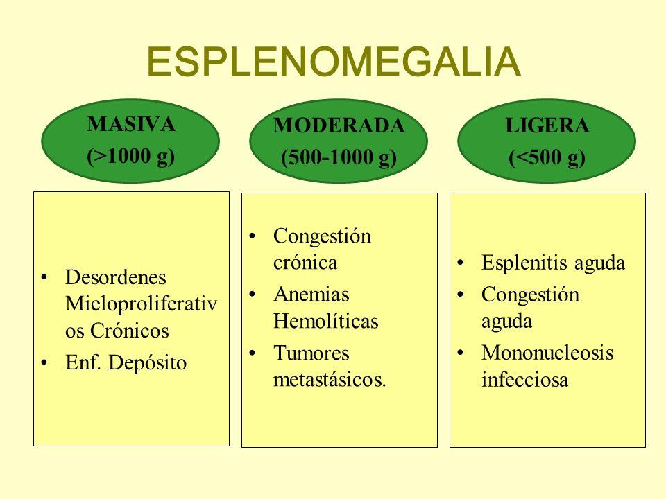 ESPLENOMEGALIA MASIVA (>1000 g) MODERADA (500-1000 g) LIGERA