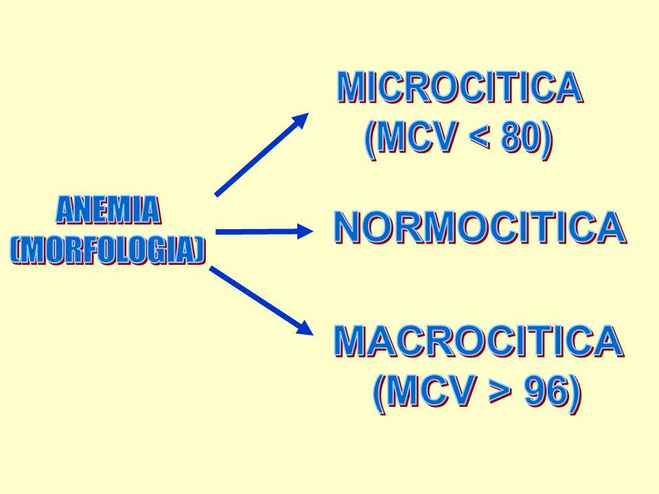 ANEMIA (MORFOLOGIA) MICROCITICA (MCV < 80) NORMOCITICA MACROCITICA