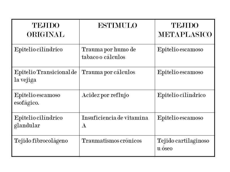 TEJIDO ORIGINAL ESTIMULO TEJIDO METAPLASICO Epitelio cilíndrico