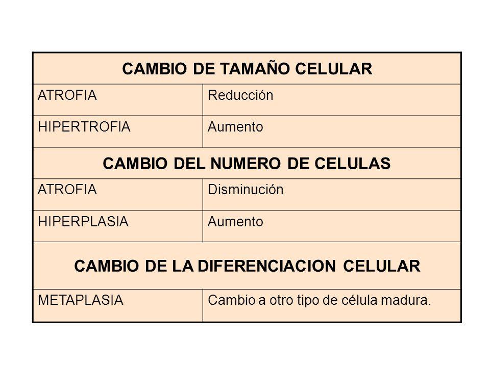 CAMBIO DE TAMAÑO CELULAR