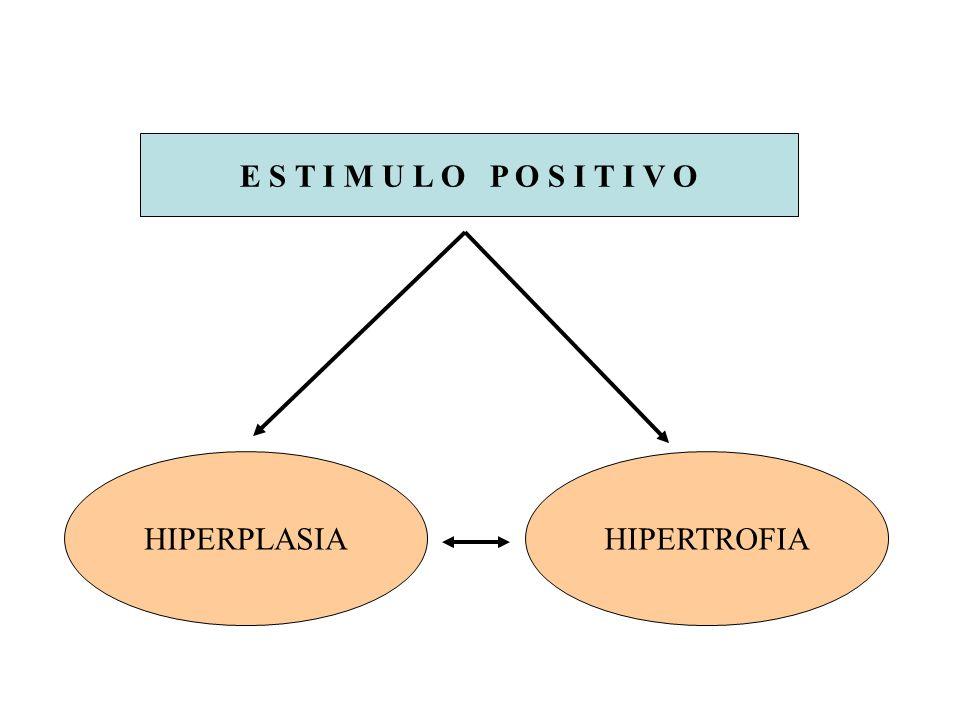 E S T I M U L O P O S I T I V O HIPERPLASIA HIPERTROFIA