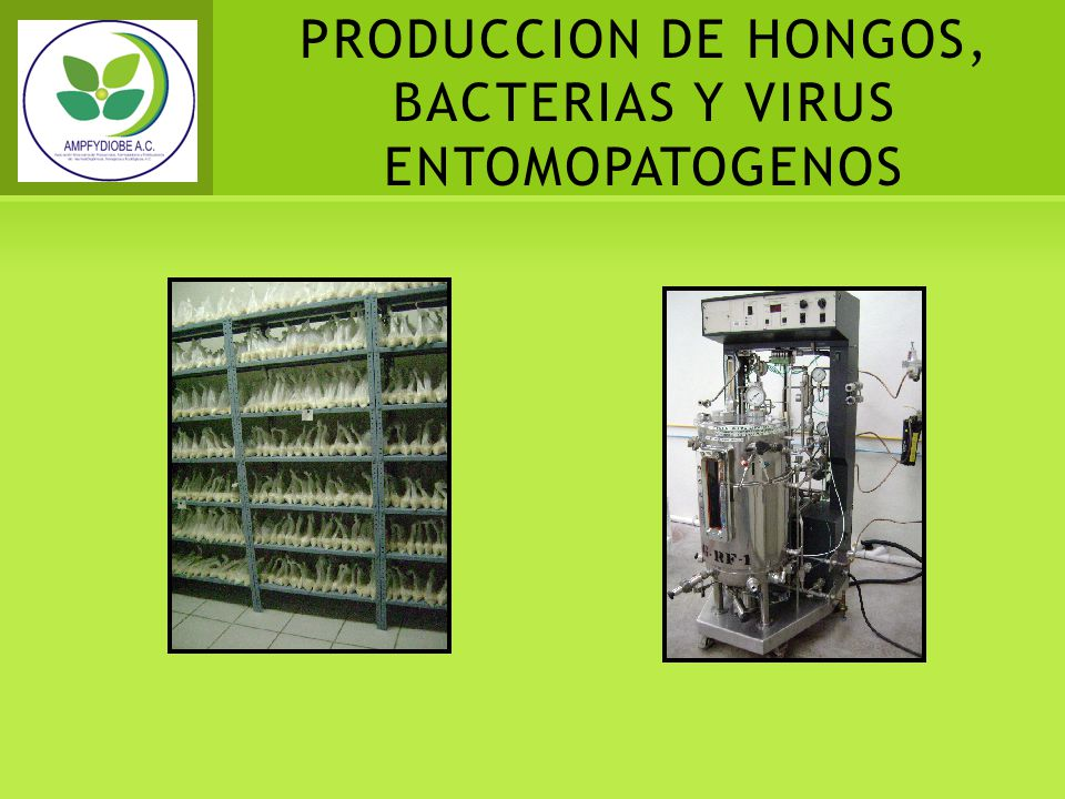 PRODUCCION DE HONGOS, BACTERIAS Y VIRUS ENTOMOPATOGENOS