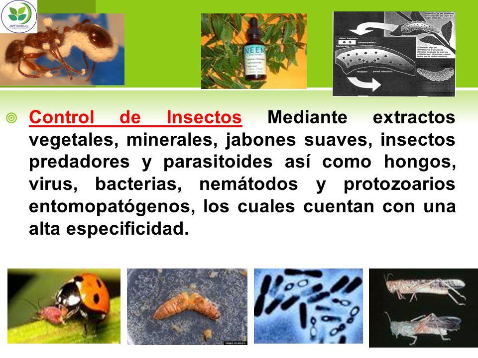 Control de Insectos Mediante extractos vegetales, minerales, jabones suaves, insectos predadores y parasitoides así como hongos, virus, bacterias, nemátodos y protozoarios entomopatógenos, los cuales cuentan con una alta especificidad.