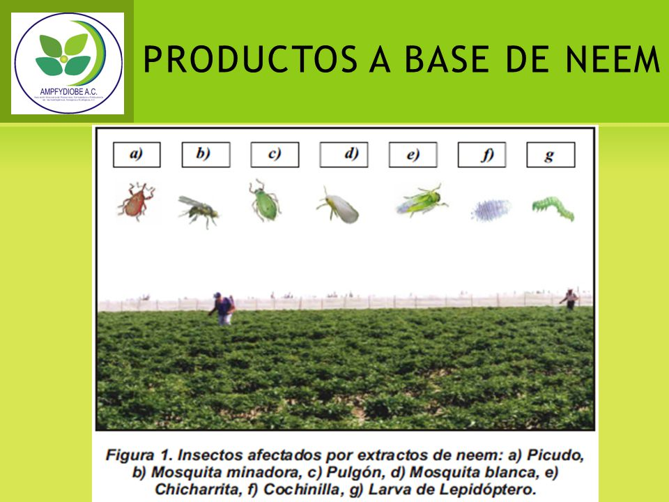 PRODUCTOS A BASE DE NEEM