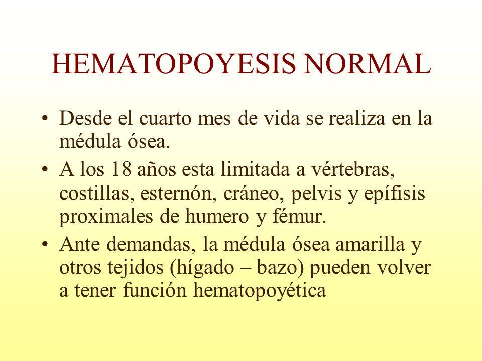 HEMATOPOYESIS NORMAL Desde el cuarto mes de vida se realiza en la médula ósea.