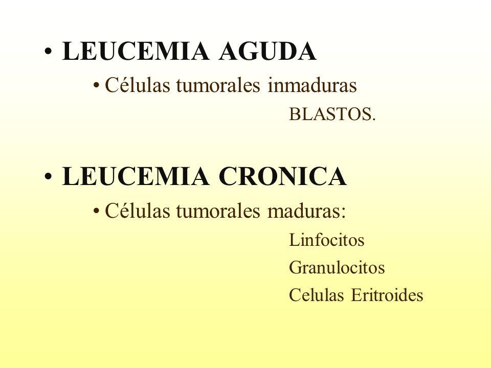LEUCEMIA AGUDA LEUCEMIA CRONICA Células tumorales inmaduras