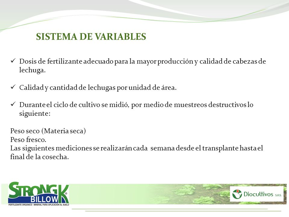 SISTEMA DE VARIABLES Dosis de fertilizante adecuado para la mayor producción y calidad de cabezas de lechuga.