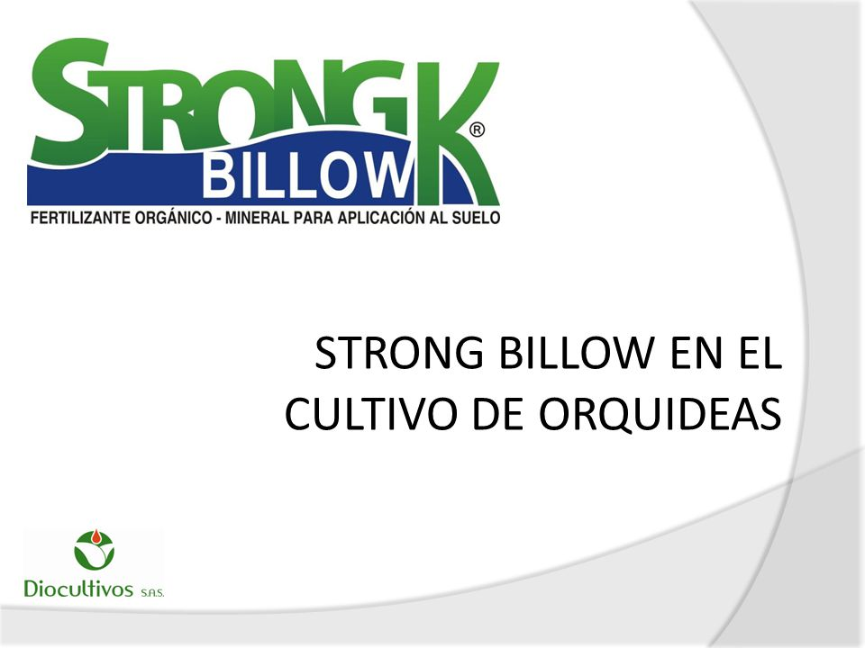 STRONG BILLOW EN EL CULTIVO DE ORQUIDEAS