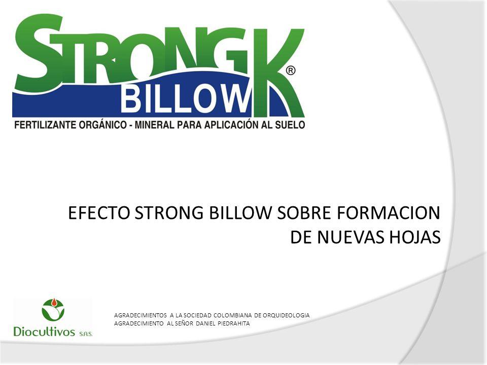 EFECTO STRONG BILLOW SOBRE FORMACION DE NUEVAS HOJAS