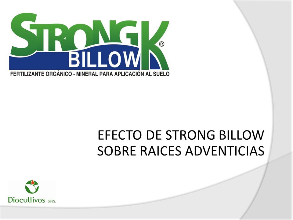 EFECTO DE STRONG BILLOW SOBRE RAICES ADVENTICIAS