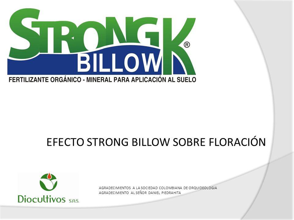 EFECTO STRONG BILLOW SOBRE FLORACIÓN