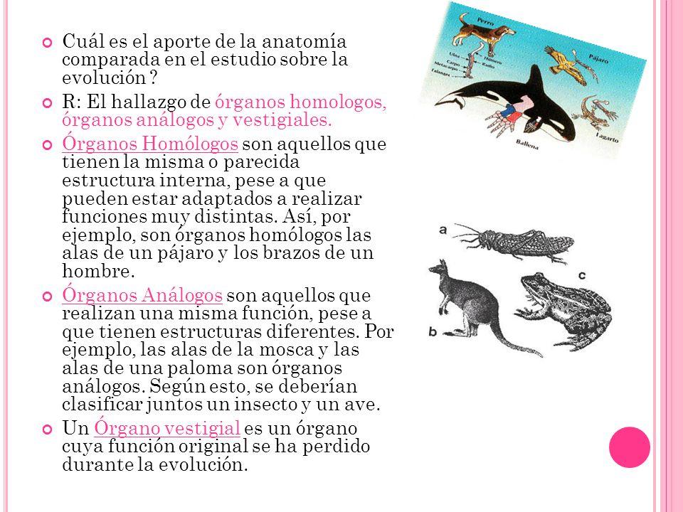 Cuál es el aporte de la anatomía comparada en el estudio sobre la evolución