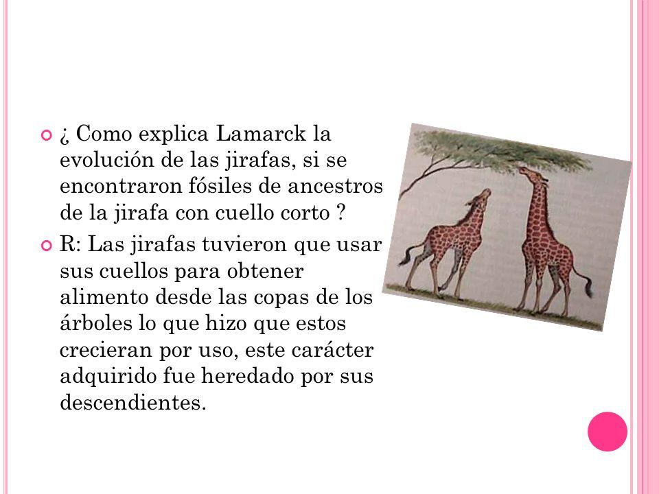 ¿ Como explica Lamarck la evolución de las jirafas, si se encontraron fósiles de ancestros de la jirafa con cuello corto