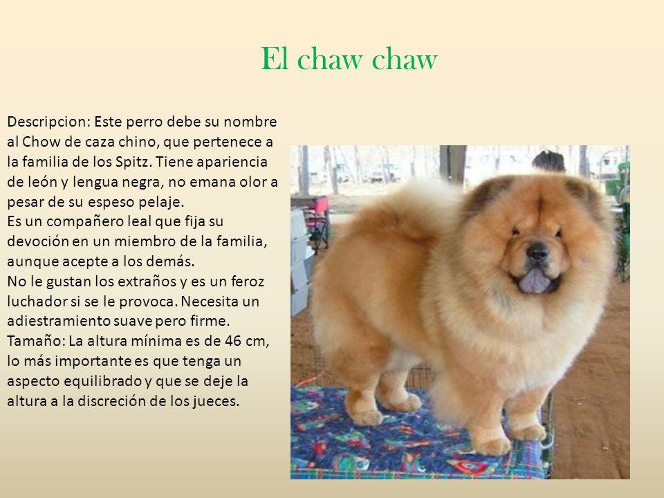 El chaw chaw