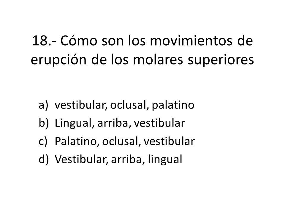 18.- Cómo son los movimientos de erupción de los molares superiores