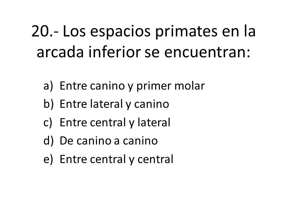 20.- Los espacios primates en la arcada inferior se encuentran: