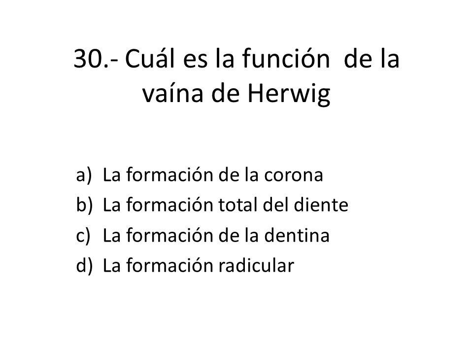 30.- Cuál es la función de la vaína de Herwig