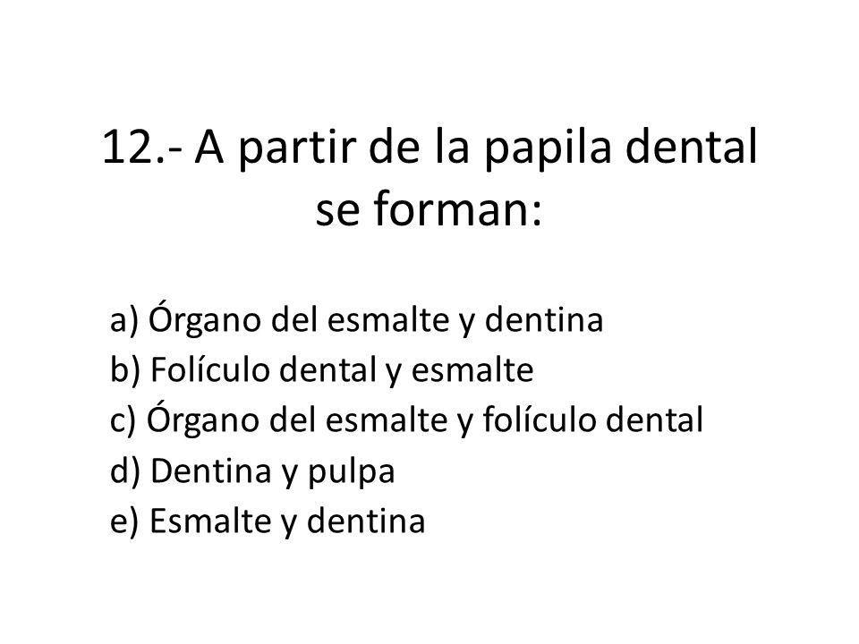 12.- A partir de la papila dental se forman: