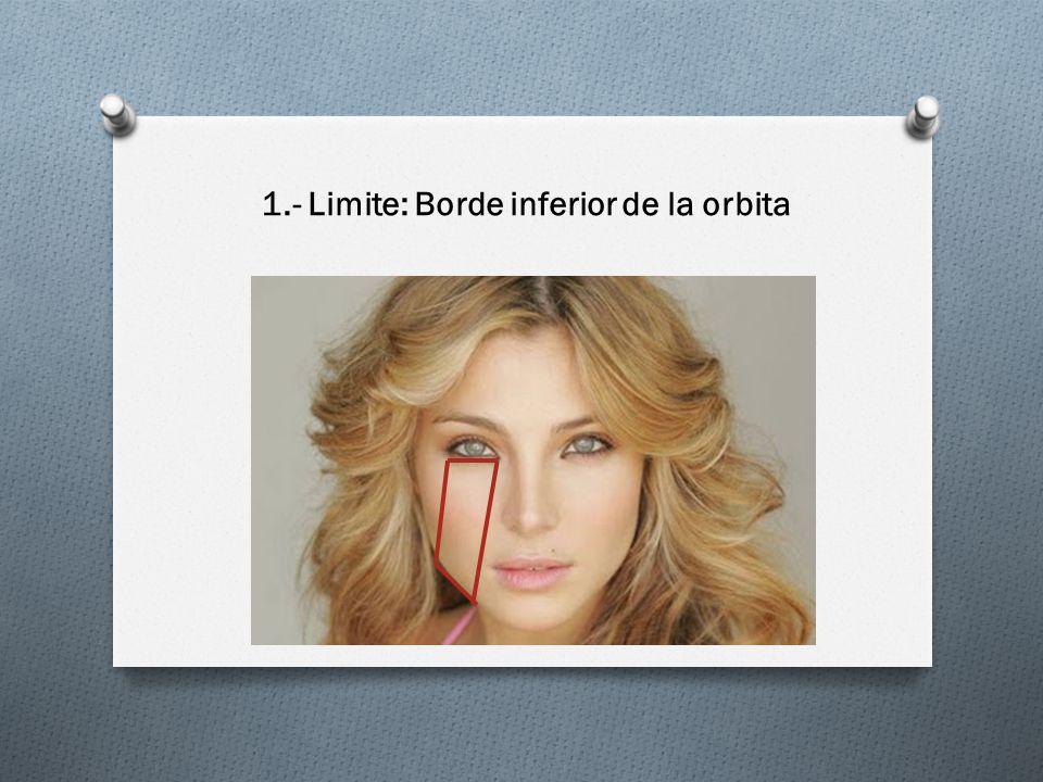 1.- Limite: Borde inferior de la orbita