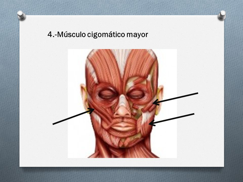 4.-Músculo cigomático mayor