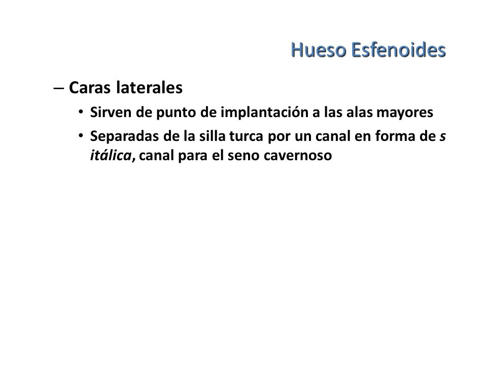 Hueso Esfenoides Caras laterales