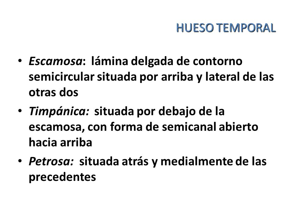 HUESO TEMPORAL Escamosa: lámina delgada de contorno semicircular situada por arriba y lateral de las otras dos.