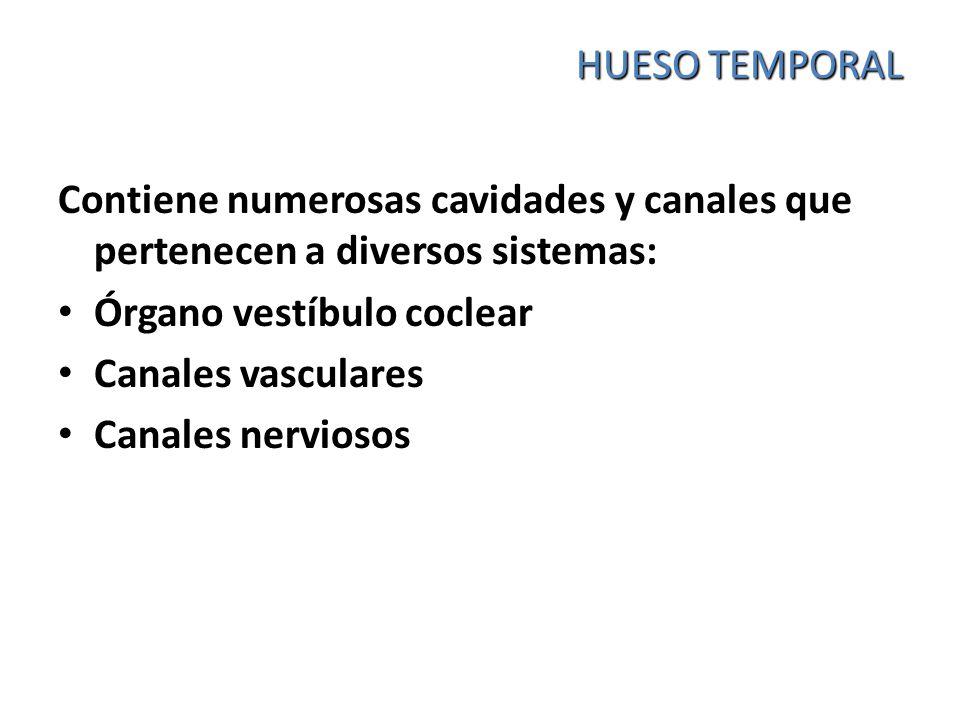 HUESO TEMPORAL Contiene numerosas cavidades y canales que pertenecen a diversos sistemas: Órgano vestíbulo coclear.