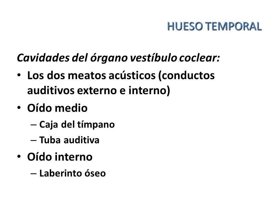 Cavidades del órgano vestíbulo coclear:
