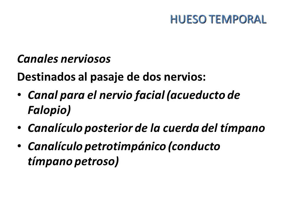 HUESO TEMPORAL Canales nerviosos. Destinados al pasaje de dos nervios: Canal para el nervio facial (acueducto de Falopio)