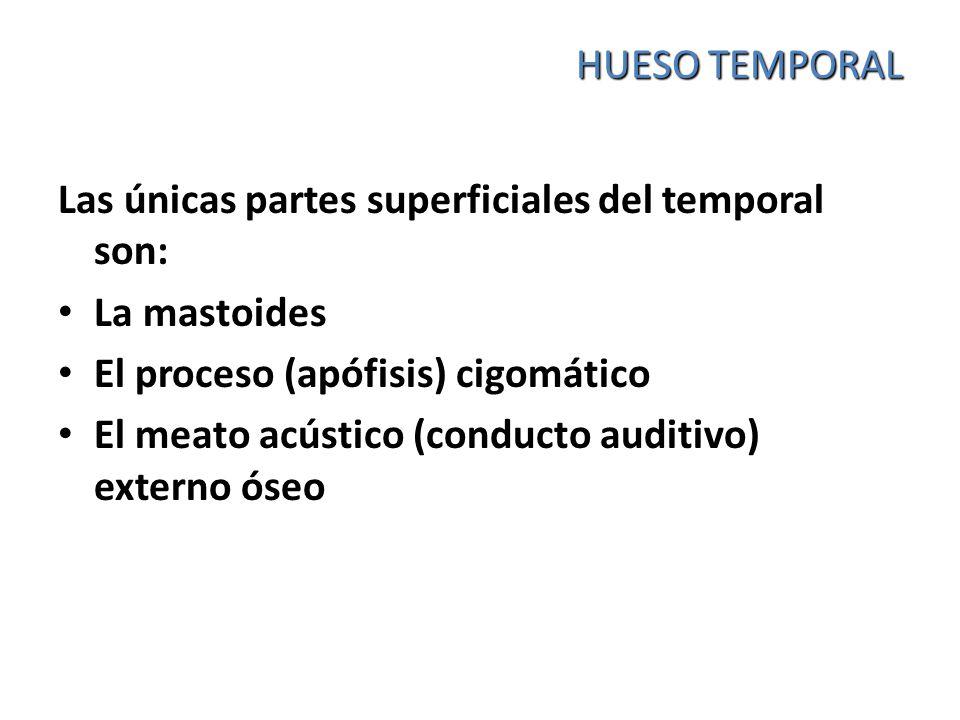 HUESO TEMPORAL Las únicas partes superficiales del temporal son: La mastoides. El proceso (apófisis) cigomático.