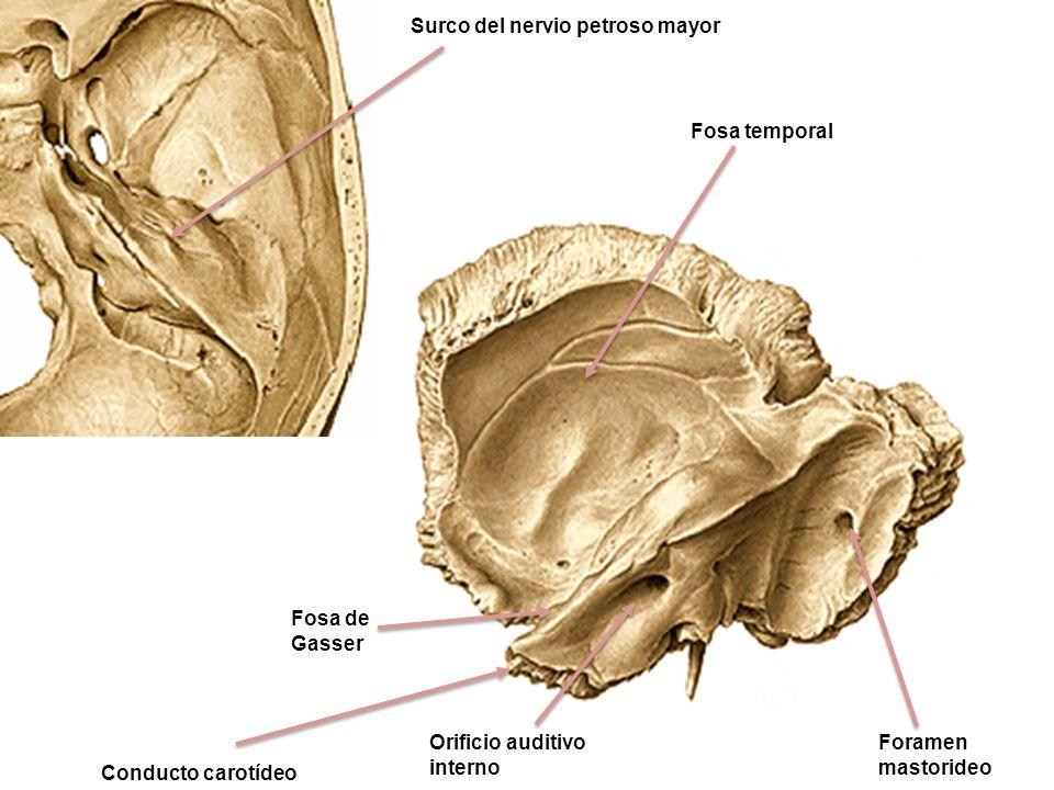 Surco del nervio petroso mayor