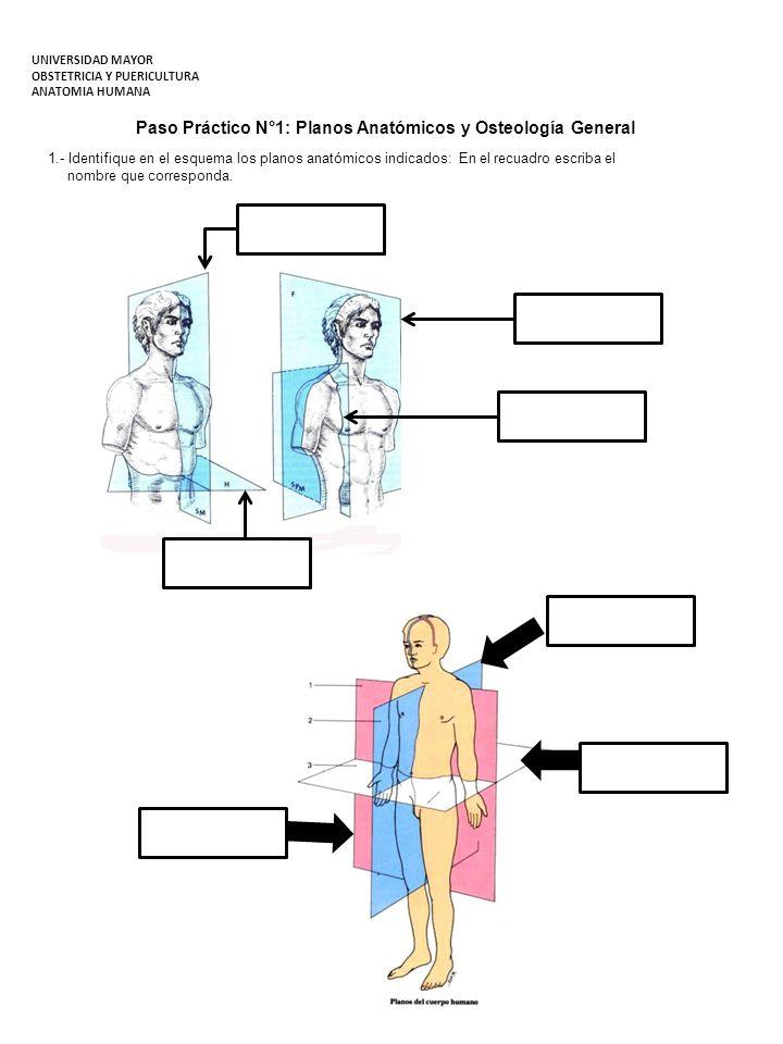 Paso Práctico N°1: Planos Anatómicos y Osteología General