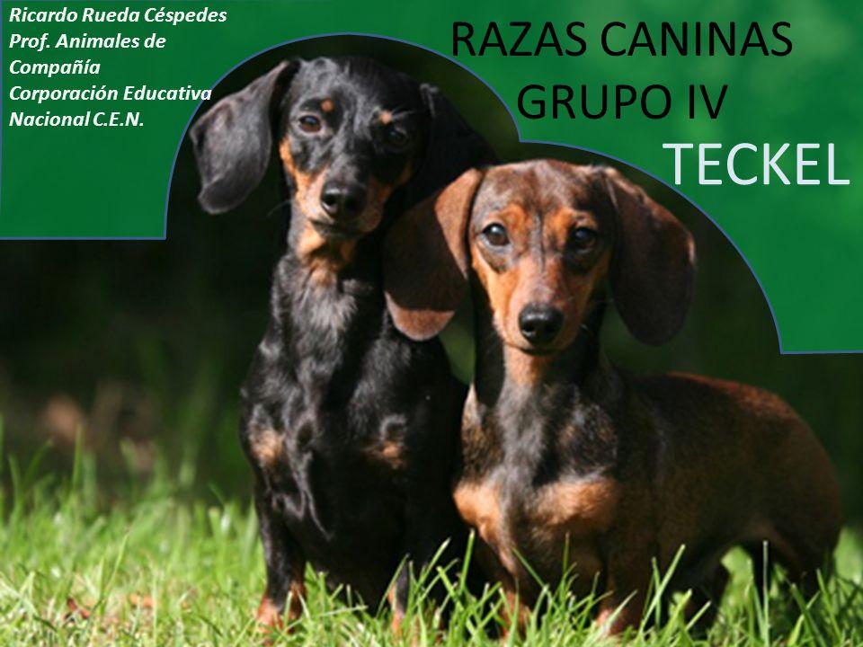 TECKEL RAZAS CANINAS GRUPO IV Ricardo Rueda Céspedes