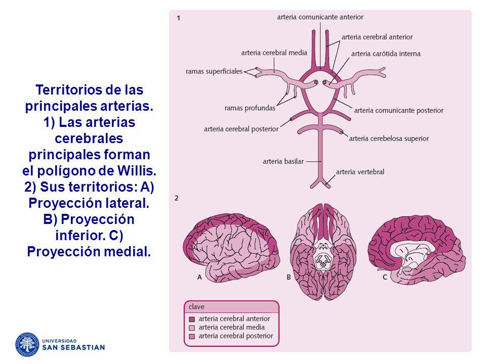 Territorios de las principales arterias