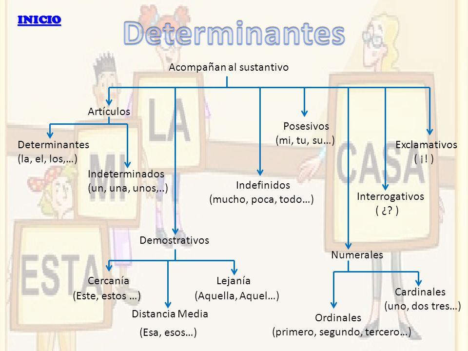 Determinantes INICIO Acompañan al sustantivo Artículos Posesivos