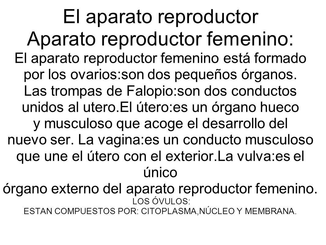 El aparato reproductor Aparato reproductor femenino: El aparato reproductor femenino está formado por los ovarios:son dos pequeños órganos.