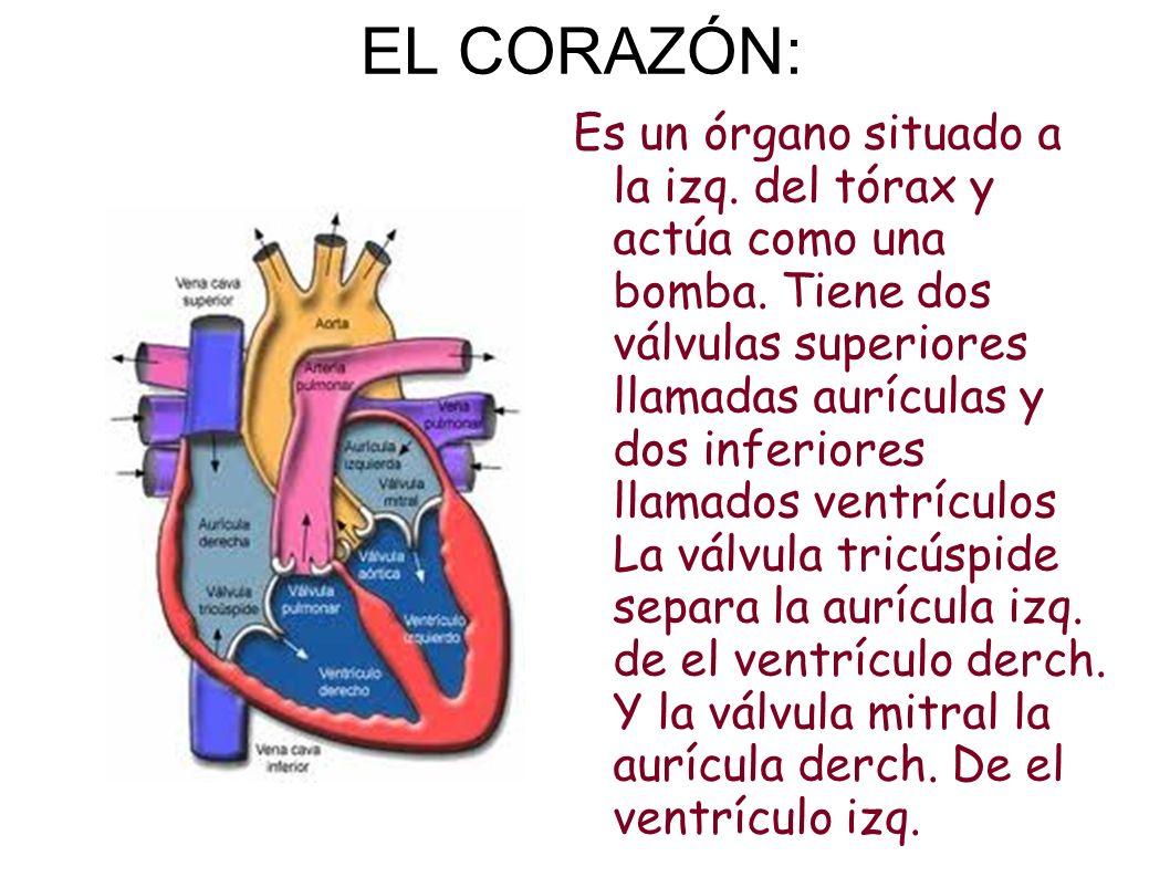 EL CORAZÓN: