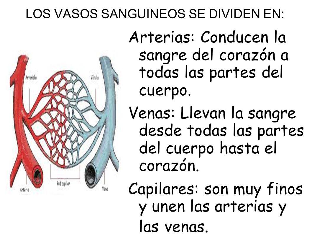 LOS VASOS SANGUINEOS SE DIVIDEN EN: