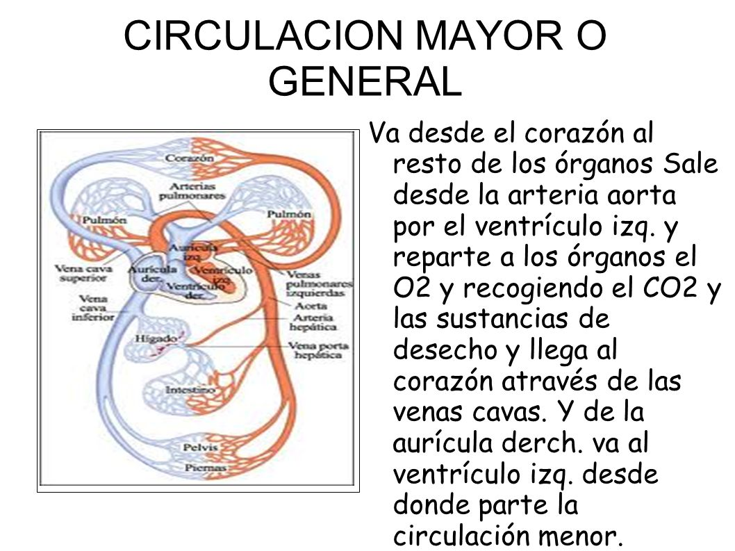 CIRCULACION MAYOR O GENERAL