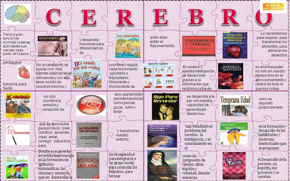 C E. R. E. B. R. O. Tiene la gran función de controlar todas las actividades que realizan cada parte de nuestra.