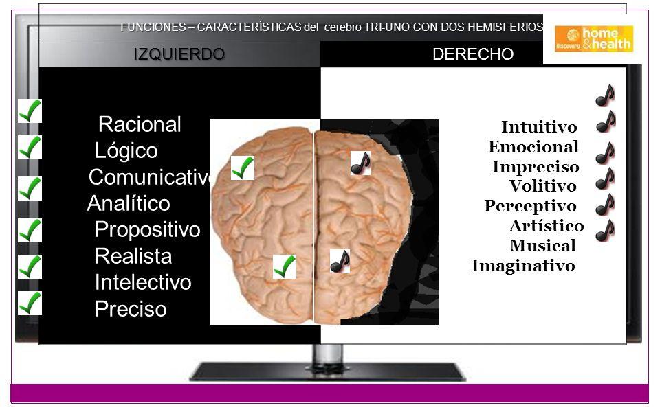 FUNCIONES – CARACTERÍSTICAS del cerebro TRI-UNO CON DOS HEMISFERIOS