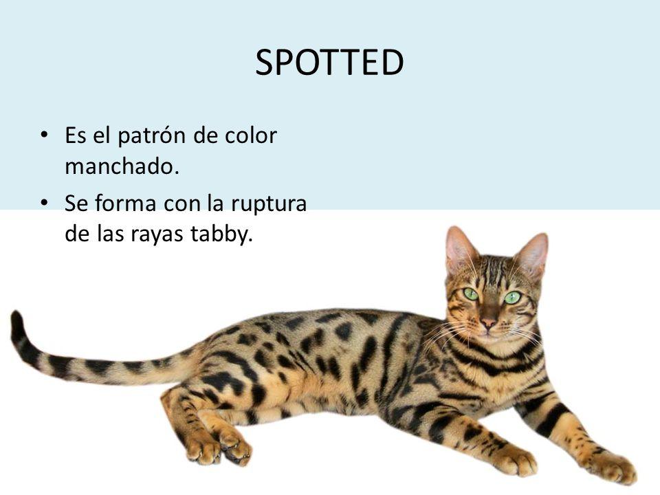 SPOTTED Es el patrón de color manchado.