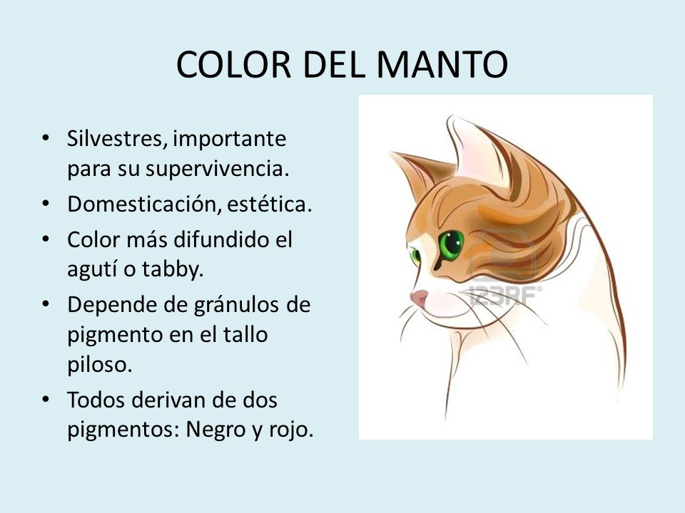 COLOR DEL MANTO Silvestres, importante para su supervivencia.