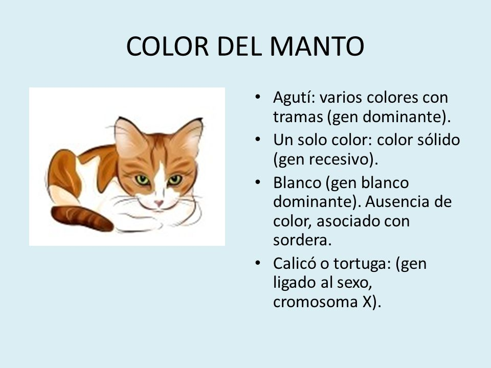 COLOR DEL MANTO Agutí: varios colores con tramas (gen dominante).