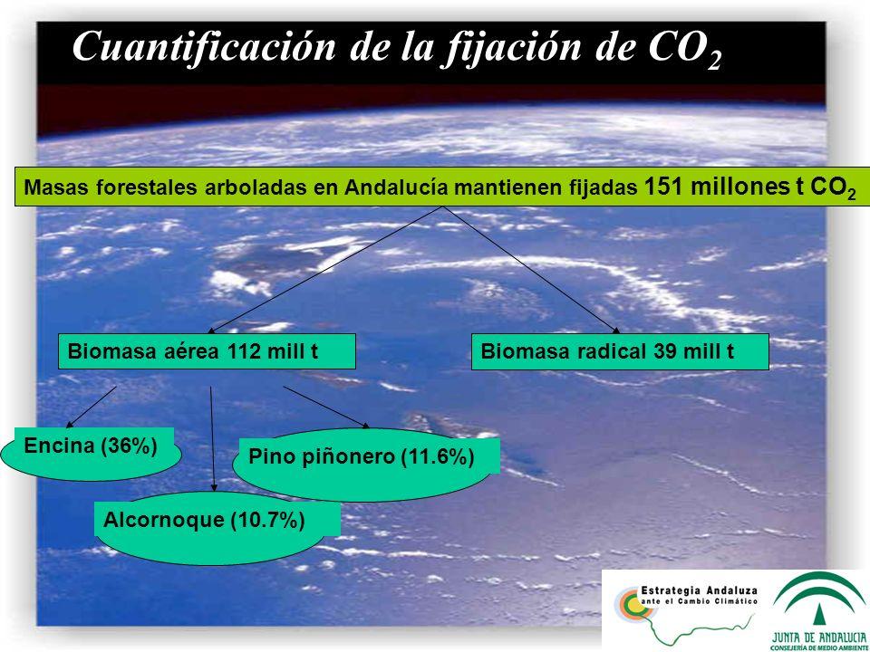 a) Cuantificación de la fijación de CO2