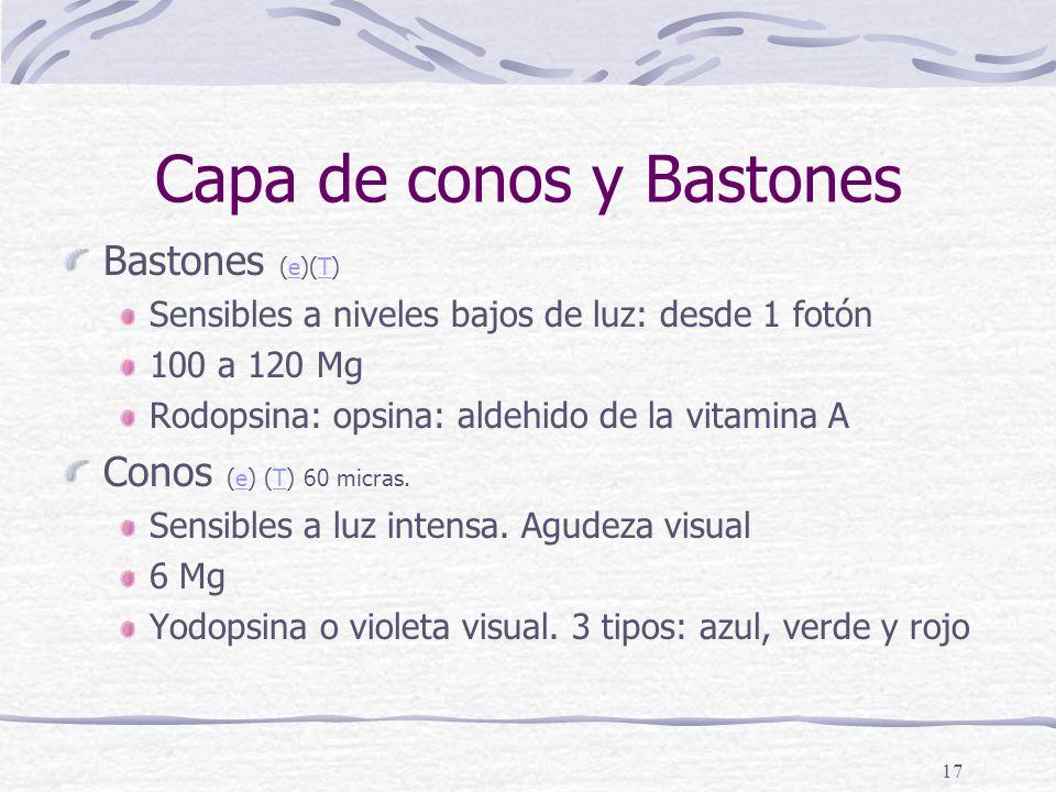 Capa de conos y Bastones