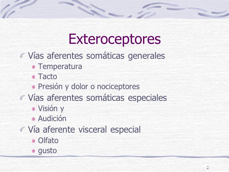 Exteroceptores Vías aferentes somáticas generales