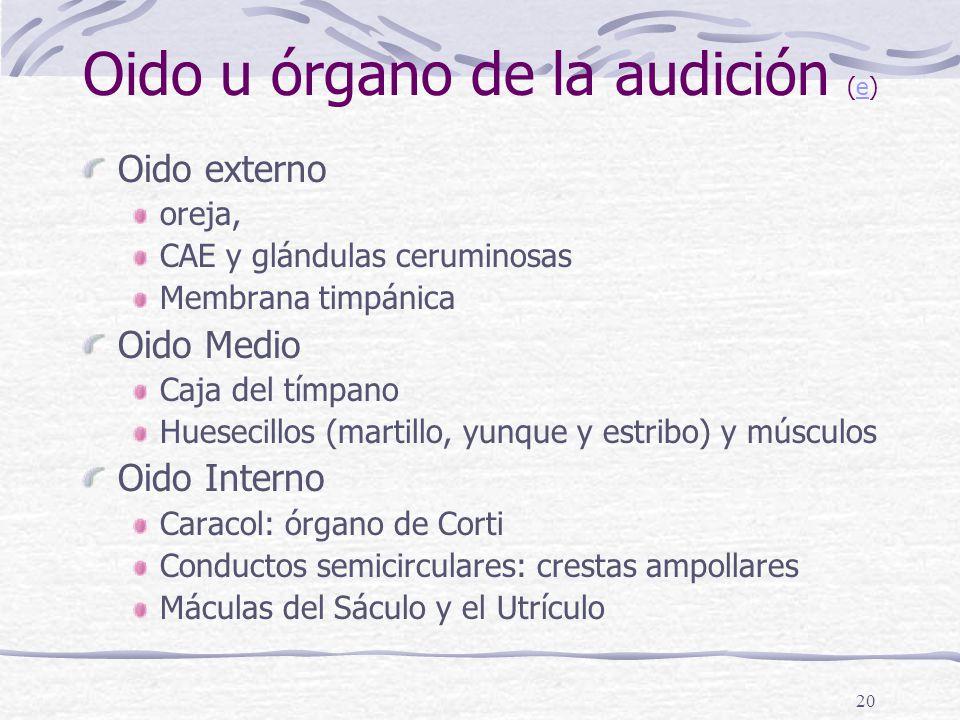 Oido u órgano de la audición (e)