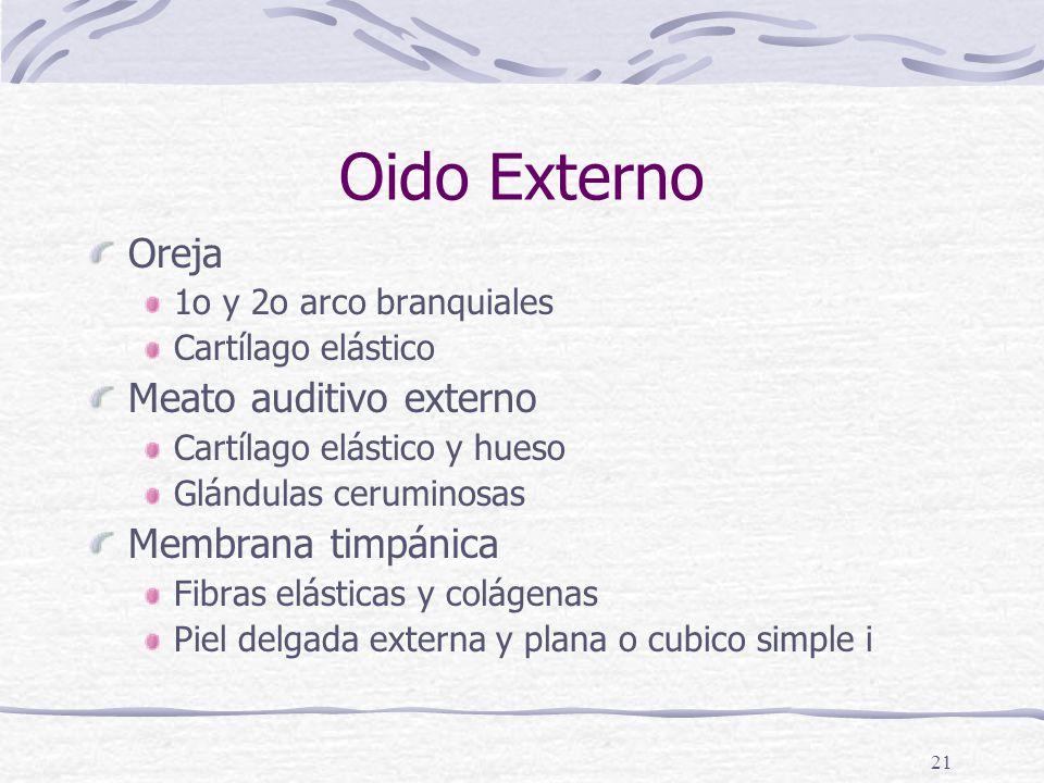 Oido Externo Oreja Meato auditivo externo Membrana timpánica