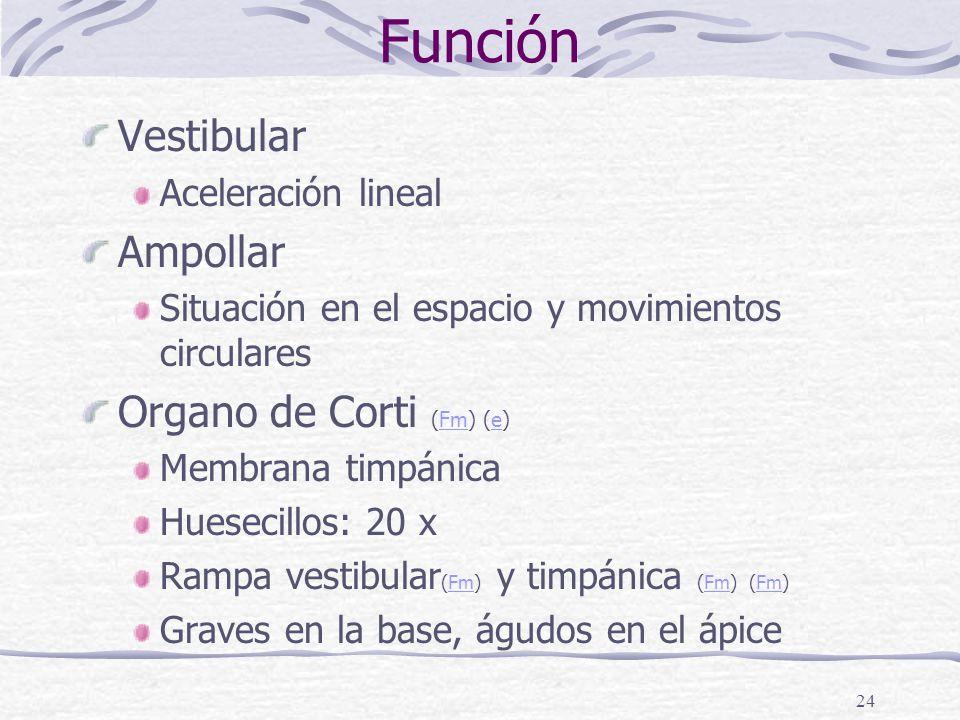 Función Vestibular Ampollar Organo de Corti (Fm) (e)